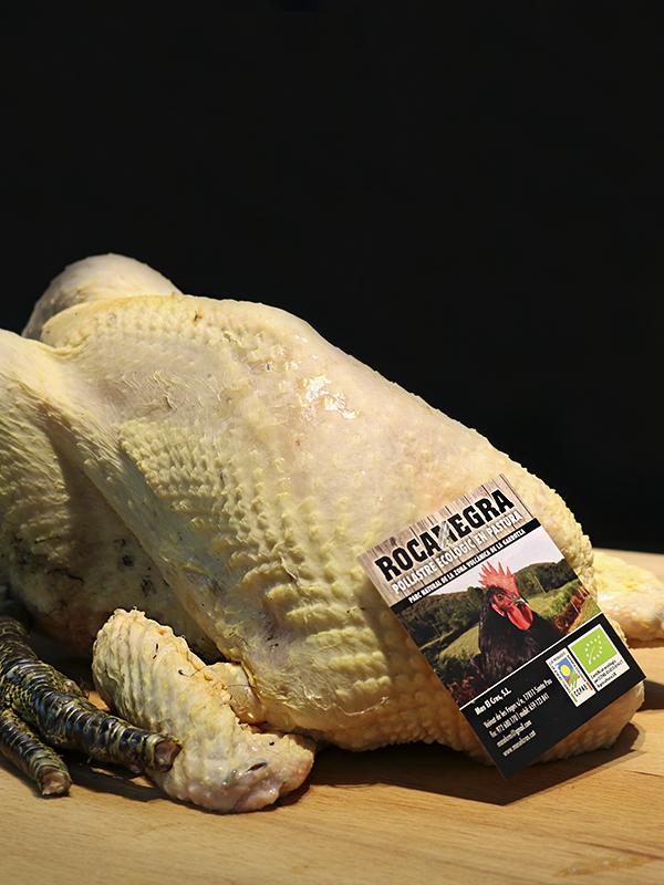 pollastre-rocanegra